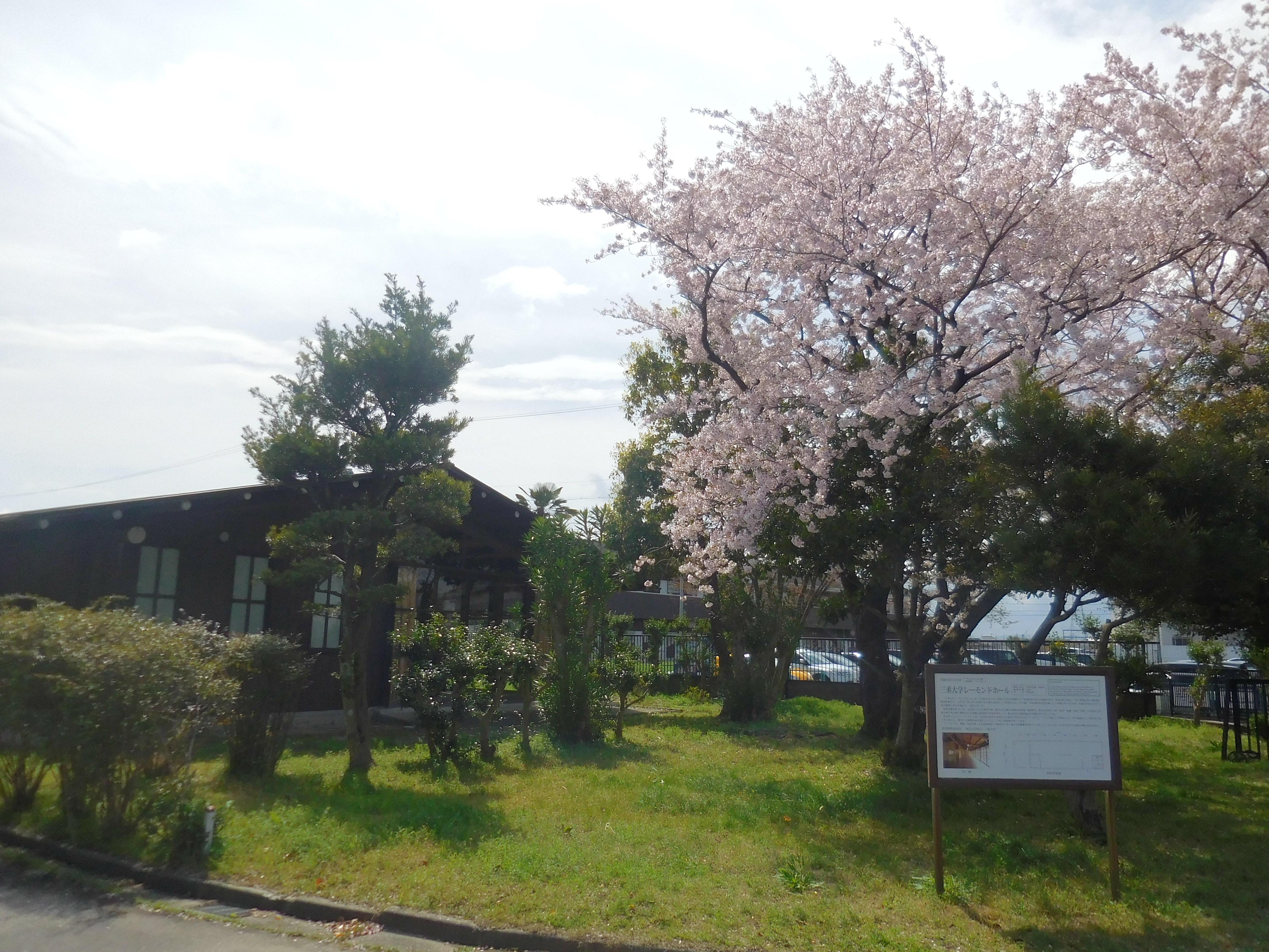 桜の写真4